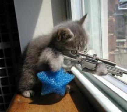 Vittorio Sgarbi invaso da immagini di gatti 6