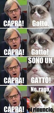 Vittorio Sgarbi invaso da immagini di gatti 1