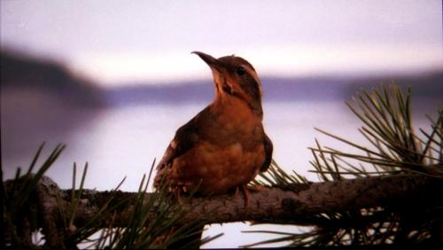 Twin Peaks terza stagione, tutti i segreti della nuova serie
