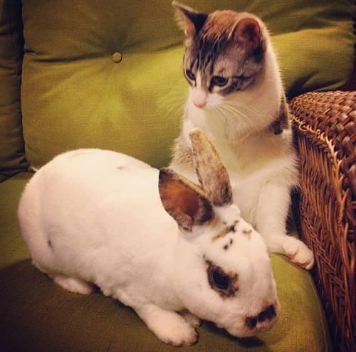 Roux, la gatta nata con due zampe 15