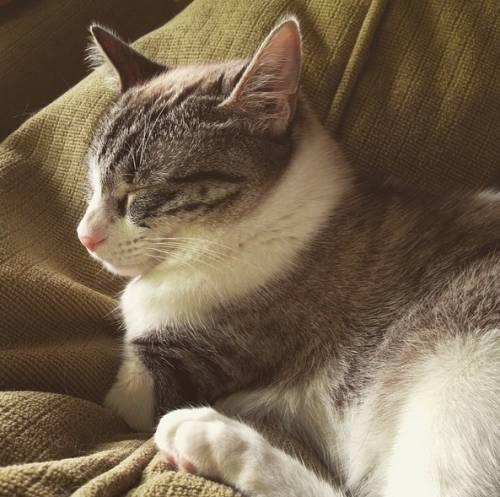 Roux, la gatta nata con due zampe 14