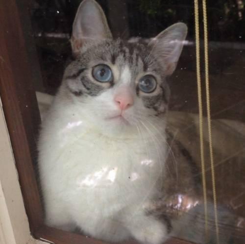 Roux, la gatta nata con due zampe 17