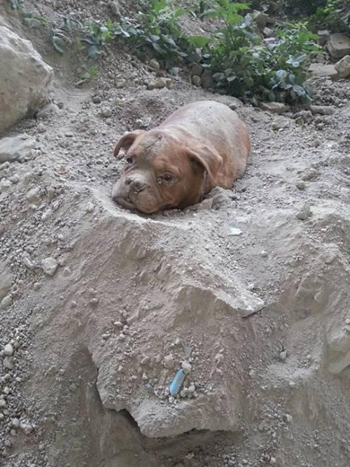 Parigi, cane sepolto vivo viene salvato da un passante