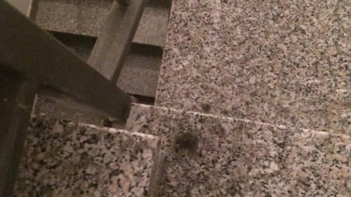 Gli immigrati si tagliano i capelli fuori dall'ascensore e i cittadini protestano 4