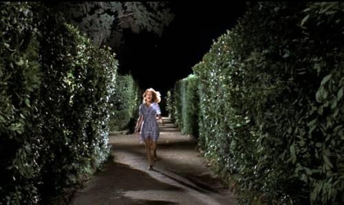 Il cinema di Dario Argento 25