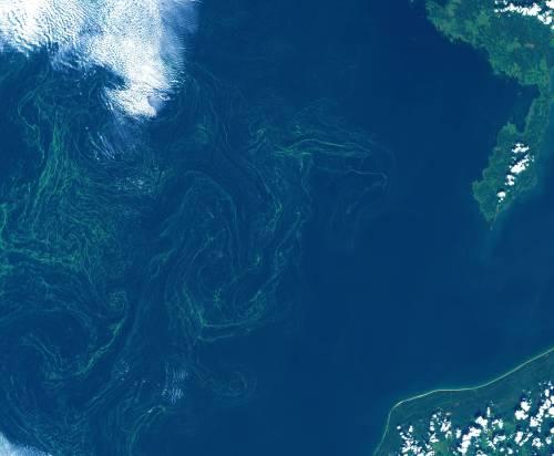 La tempesta di alghe nel Mar Baltico 2