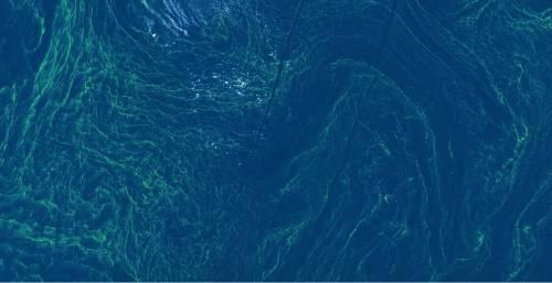La tempesta di alghe nel Mar Baltico 3