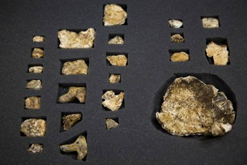 I resti dell'Homo Naledi, nuova specie umana 6