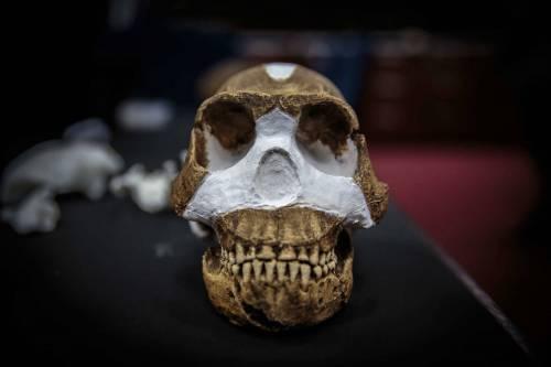 I resti dell'Homo Naledi, nuova specie umana 8