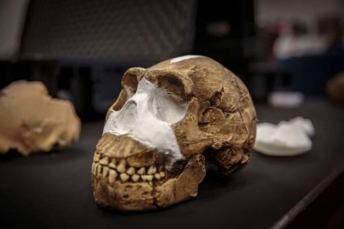 I resti dell'Homo Naledi, nuova specie umana 9