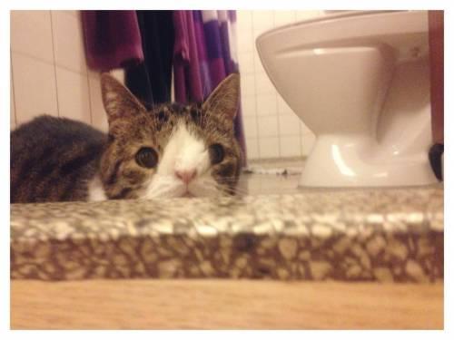 Monty, il gatto con la sindrome di Down 3