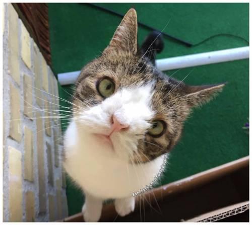 Monty, il gatto con la sindrome di Down 5