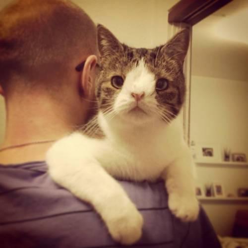 Monty, il gatto con la sindrome di Down 6
