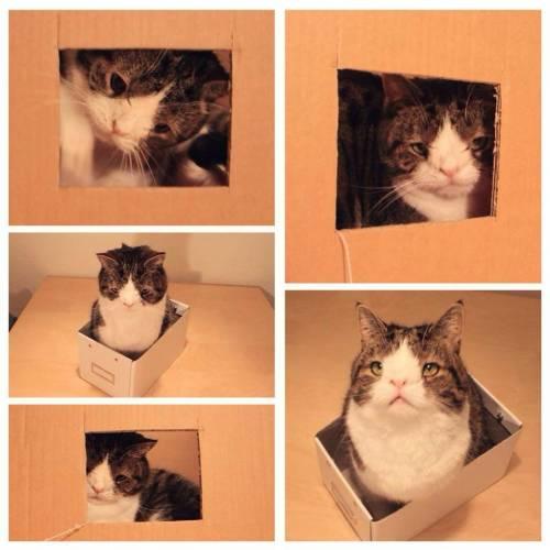 Monty, il gatto con la sindrome di Down 7