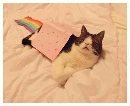 Monty, il gatto con la sindrome di Down 10
