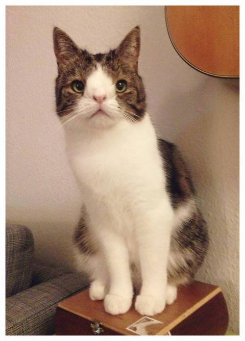 Monty, il gatto con la sindrome di Down 14