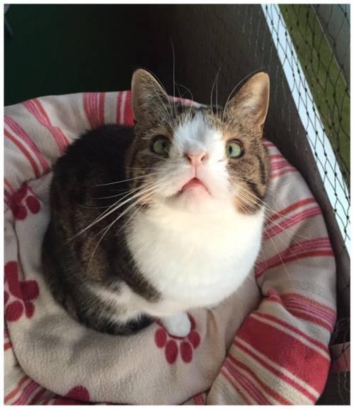 Monty, il gatto con la sindrome di Down 15