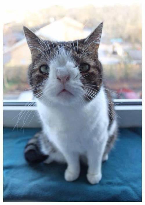 Monty, il gatto con la sindrome di Down 13