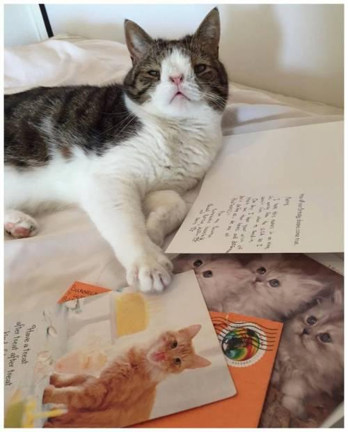 Monty, il gatto con la sindrome di Down 16