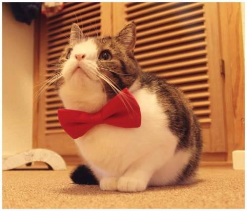 Monty, il gatto con la sindrome di Down 18