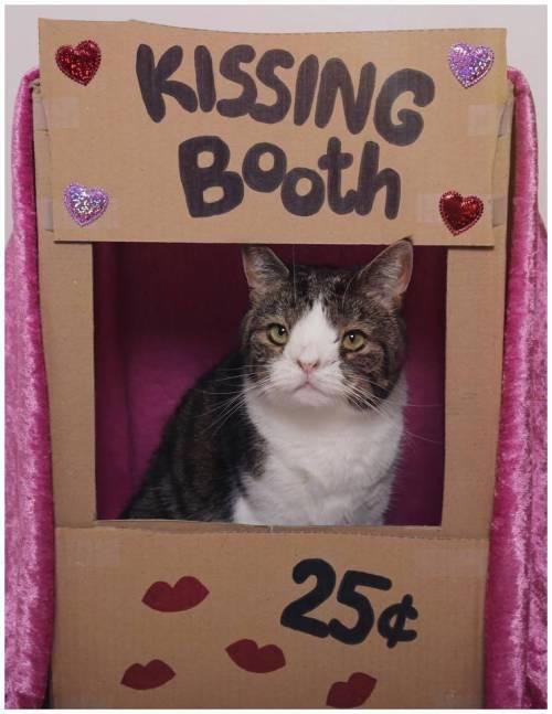 Monty, il gatto con la sindrome di Down 19