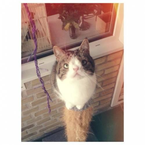 Monty, il gatto con la sindrome di Down 21