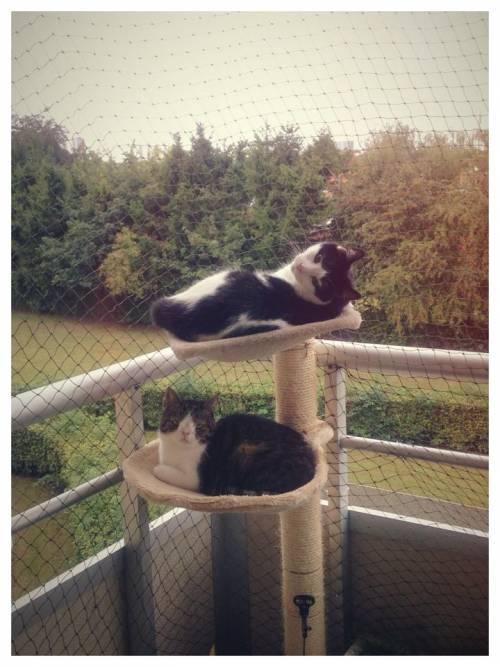 Monty, il gatto con la sindrome di Down 23