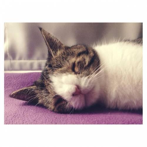 Monty, il gatto con la sindrome di Down 24