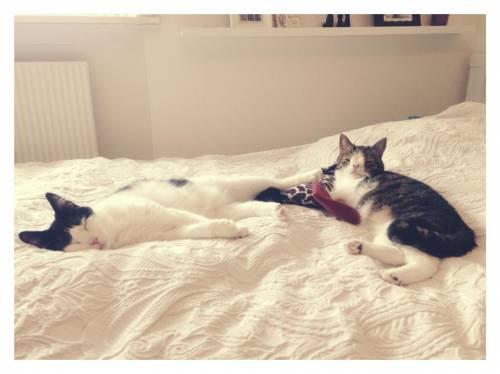 Monty, il gatto con la sindrome di Down 26