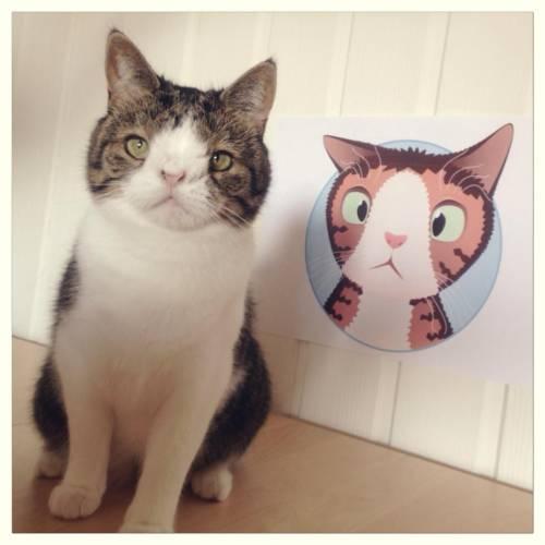 Monty, il gatto con la sindrome di Down 28