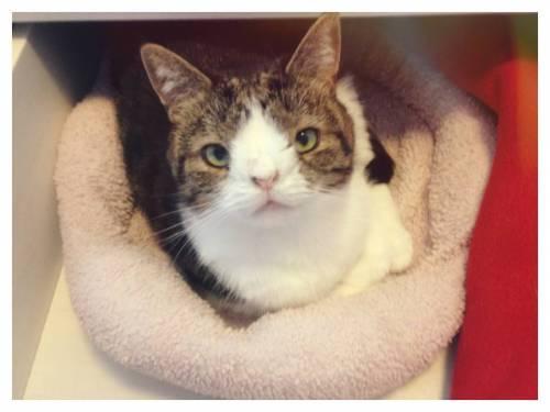 Monty, il gatto con la sindrome di Down 29