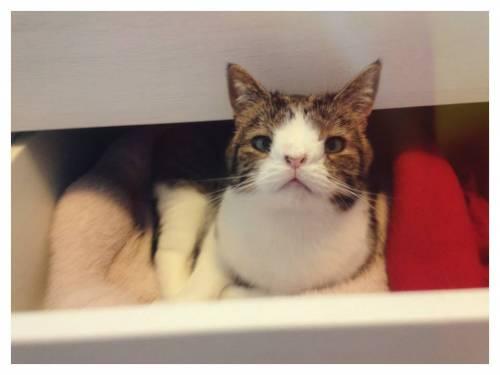 Monty, il gatto con la sindrome di Down 31