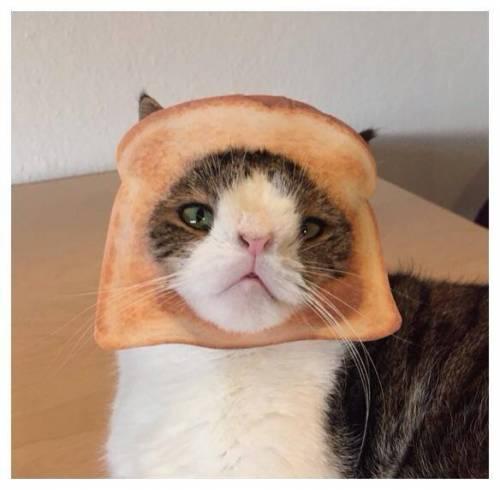 Monty, il gatto con la sindrome di Down 22