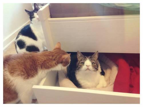 Monty, il gatto con la sindrome di Down 30