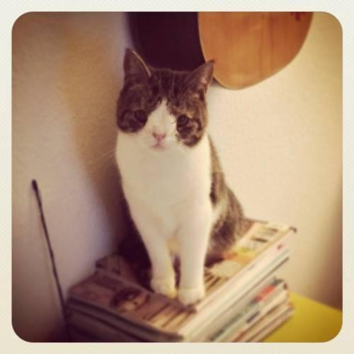 Monty, il gatto con la sindrome di Down 33