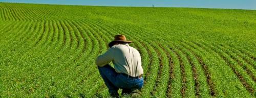 """La proposta di Razzi: """"A scuola si insegni l'agricoltura"""""""