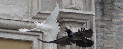 """""""I corvi? Erano insospettabili. Poi ci fu quello strano furto..."""""""