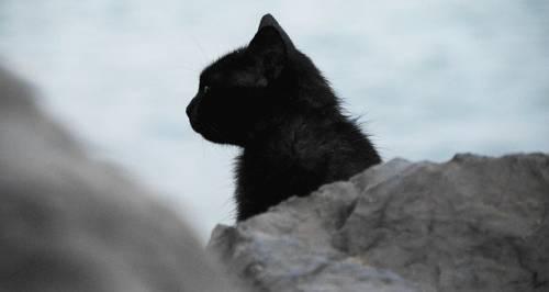 Gatto nero, foto 3
