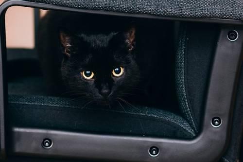 Gatto nero, foto 8