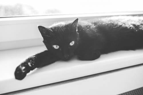 Gatto nero, foto 10