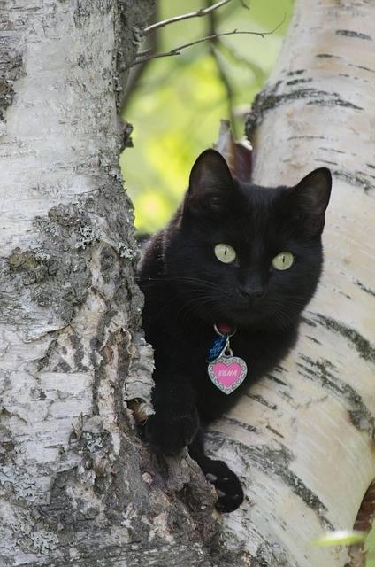 Gatto nero, foto 9