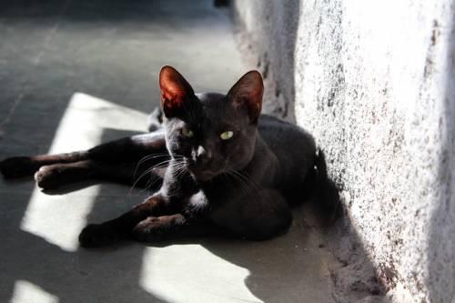 Gatto nero, foto 18
