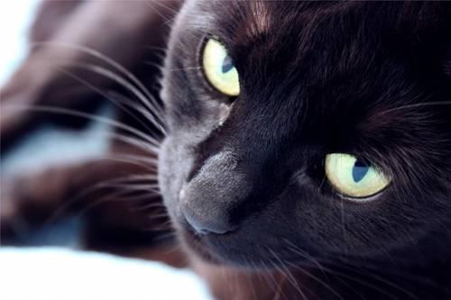Gatto nero, foto 17