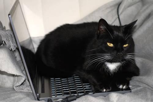 Gatto nero, foto 19