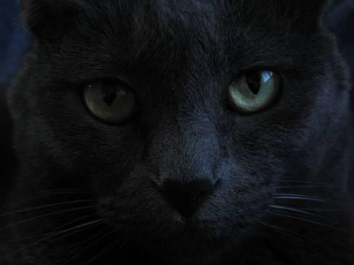 Gatto nero, foto 20