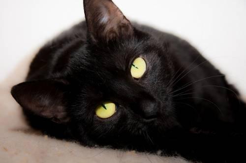 Gatto nero, foto 28