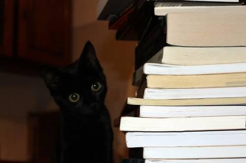 Gatto nero, foto 32