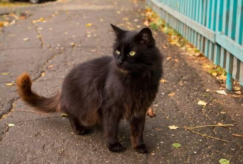 Gatto nero, foto 35