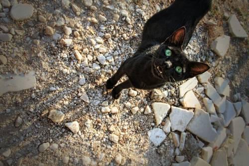 Gatto nero, foto 34