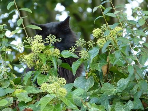 Gatto nero, foto 40